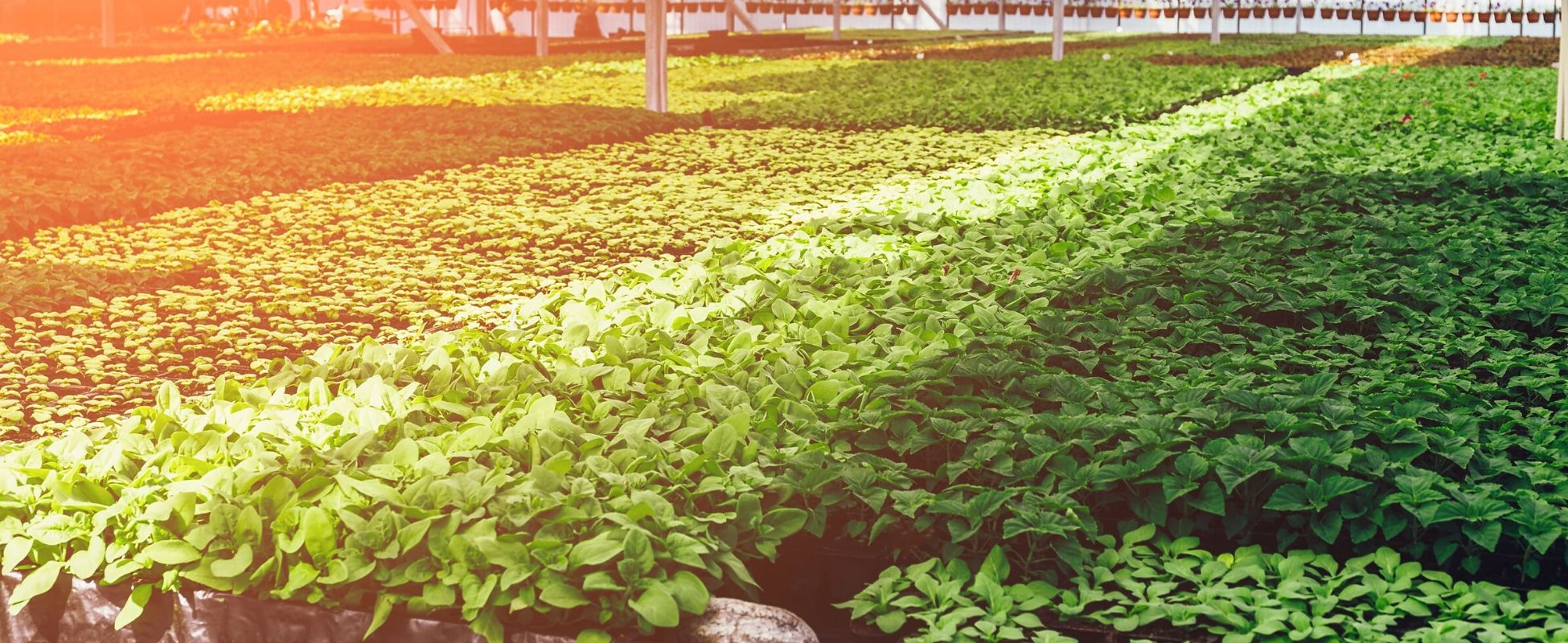 Horticulture water management